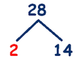 Use factor tree to factorize 28